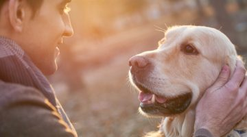 Do You Need Pet Insurance? A Point-by-Point Guide